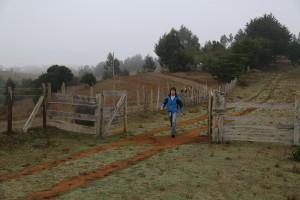 entrada aldea mapuche chile araucania