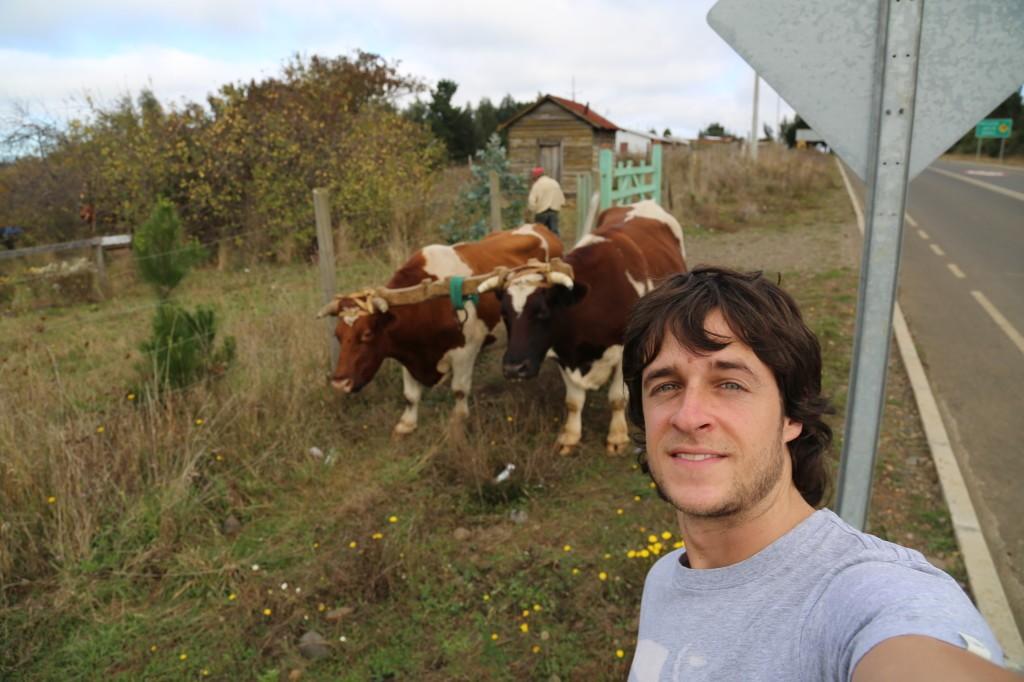 llaguepulli comunidad mapuche